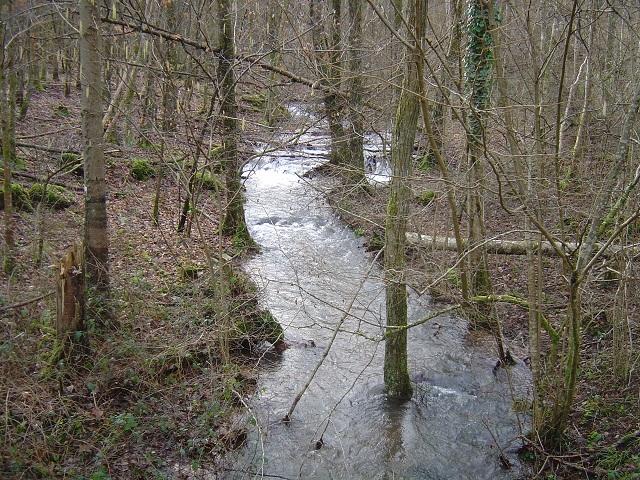 Bois de Romanswiller - Sathbach