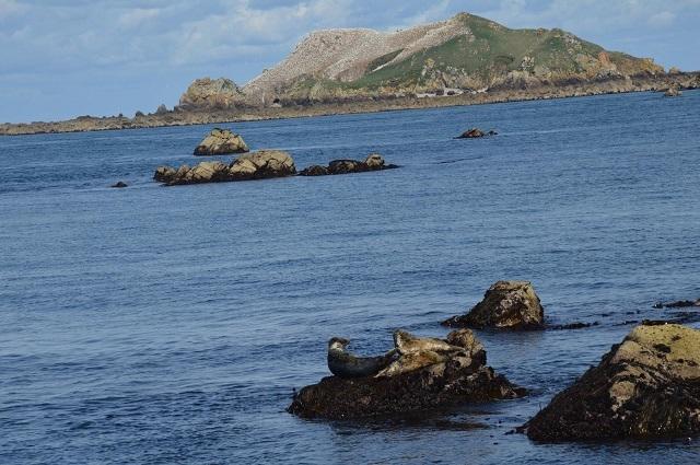 Croisière sur les 7 iles, les phoques