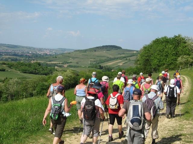 Descente du Jesslesberg - Vue sur le Scharrach
