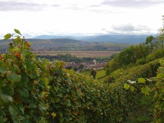 Vue sur Marlenheim et les Vosges