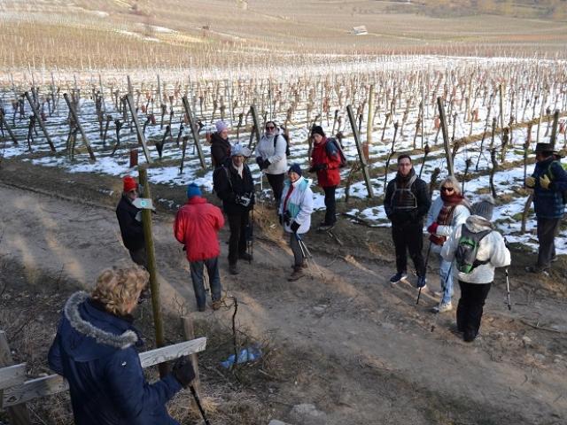 Descente du Dreispitz vers le vignoble de Dorlisheim